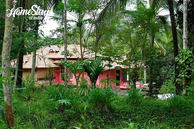 Lush Green Wayanad Homestay