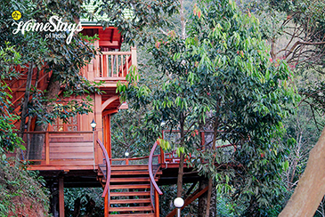 TreeHouse_Entrance_Katakeri-Homestay-Coorg