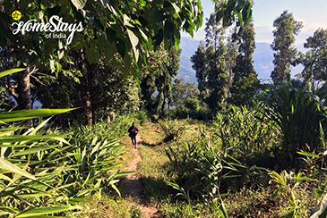 Nature-Walk_Temi-Hertitage-Homestay-Namchi