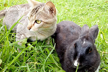 Our-Pets_Temi-Hertitage-Homestay-Namchi