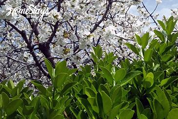 Nature_Narkanda-Homestay