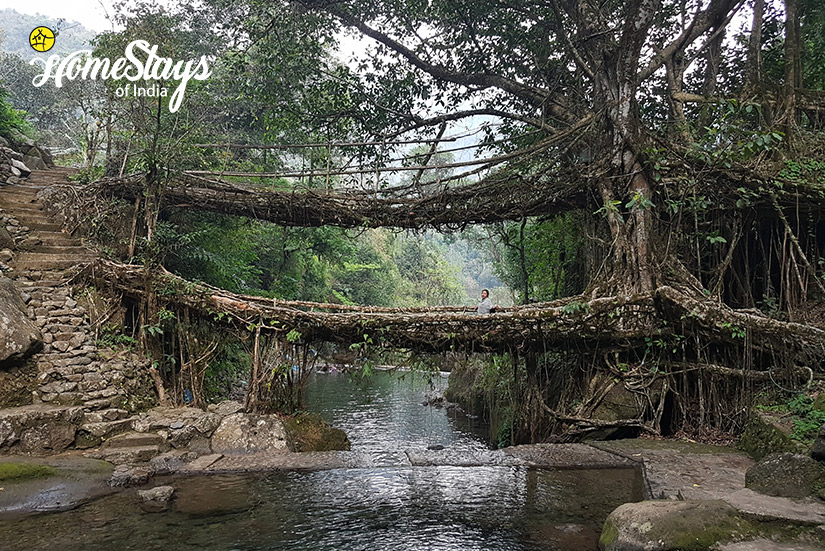 Double Decker Root Bridge_Hoi Trips-Meghalaya