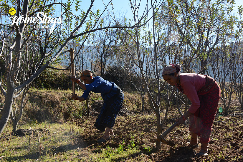 Farming_Kumaon-Uttarakhand