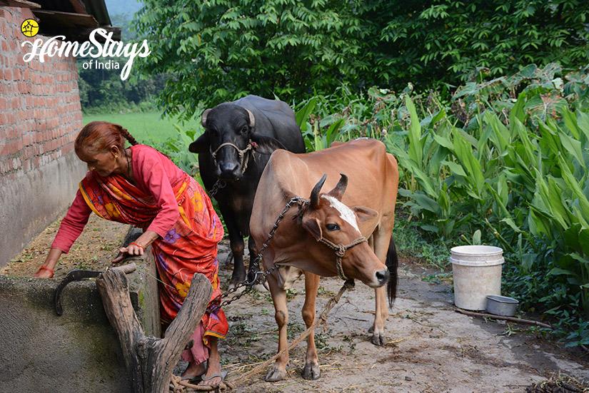 LiveStock_Kumaon-Uttarakhand