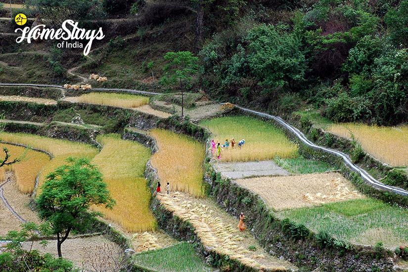 Step Farming_Kumaon-Uttarakhand