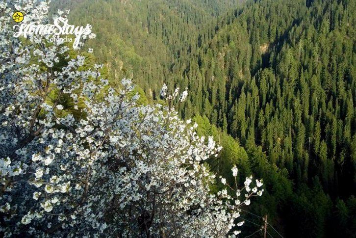 The-Valley_Narkanda-Homestay