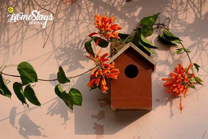 Bird-House_Pawalgarh-Homestay