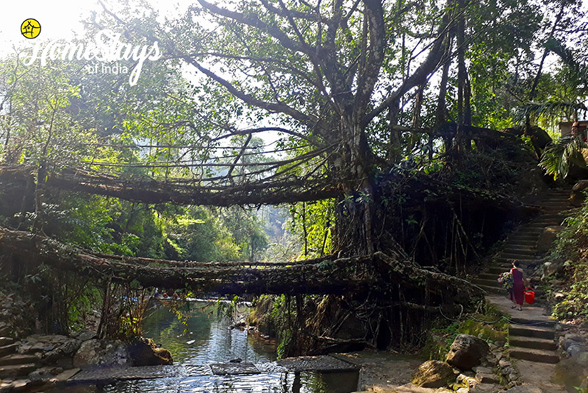 Double-Decker-Root-Bridge_Nongriat