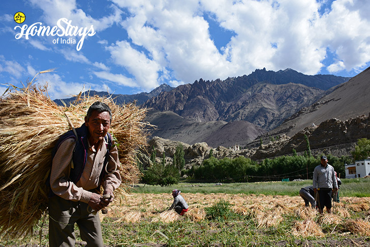 Farming-Alchi-Homestay-Ladakh