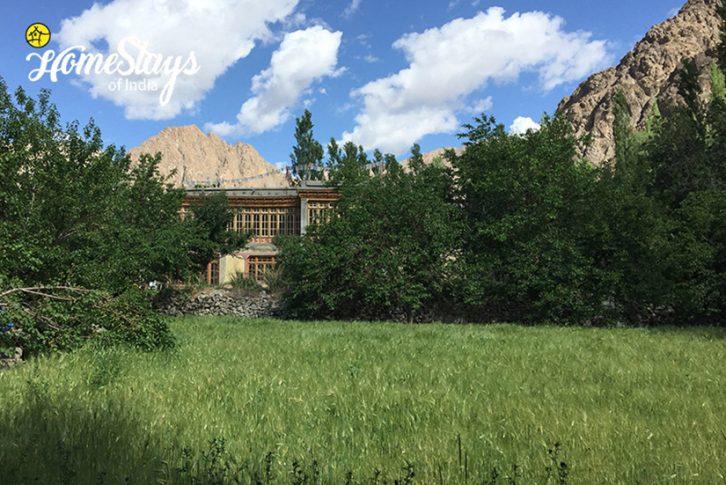 Farming_Achinathang Homestay-Ladakhv