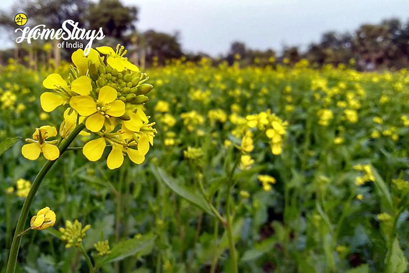 Farming_Singi Homestay