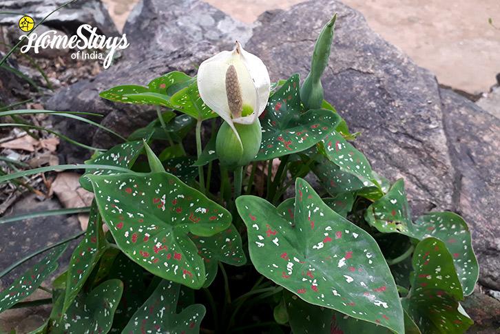 Flora-3-Nongriat Homestay