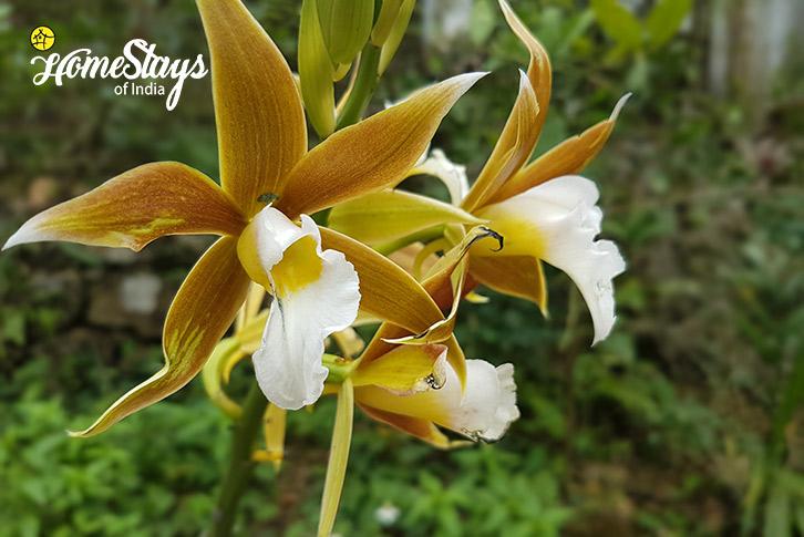 Flora-Nongriat Homestay