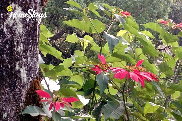 Flora-n-Fauna_Pallivasal-Homestay-Munnar