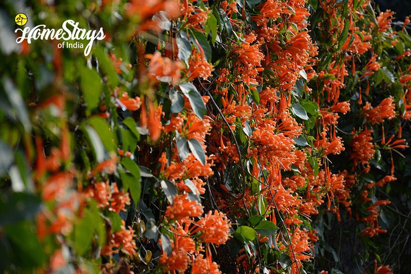Flora_Pawalgarh-Homestay