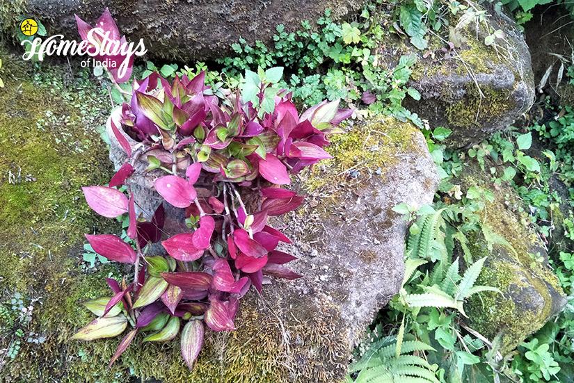 Flora_Raila Homestay-Nainital