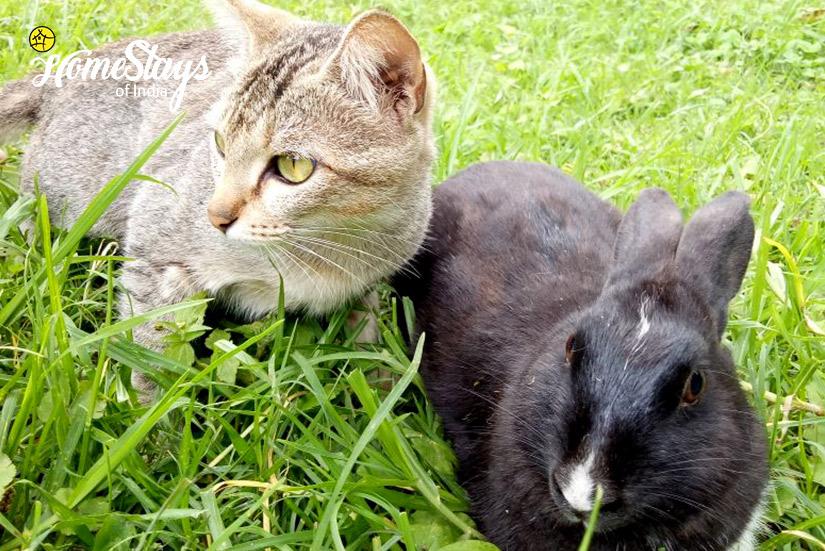 Pets_Temi-Hertitage-Homestay-Namchi