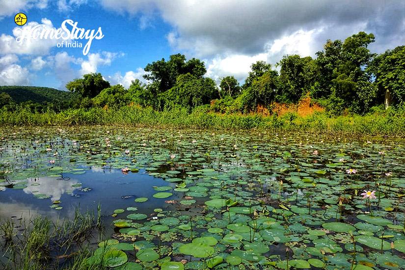 Lily-Pond_Channdaka-Homestay-Bhubneswar