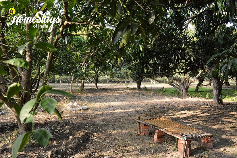 Mango-Orchard_Pawalgarh-Homestay