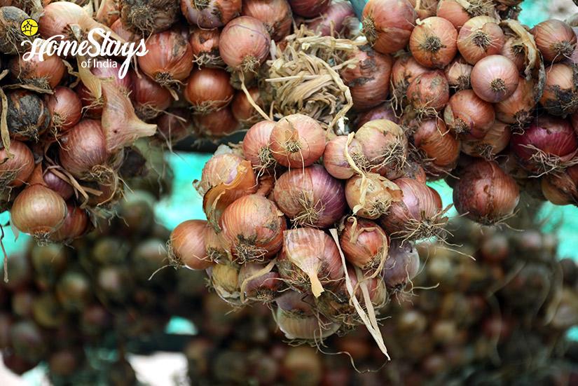 Onion-Preservation_Ramnagar-Homestay-Corbett