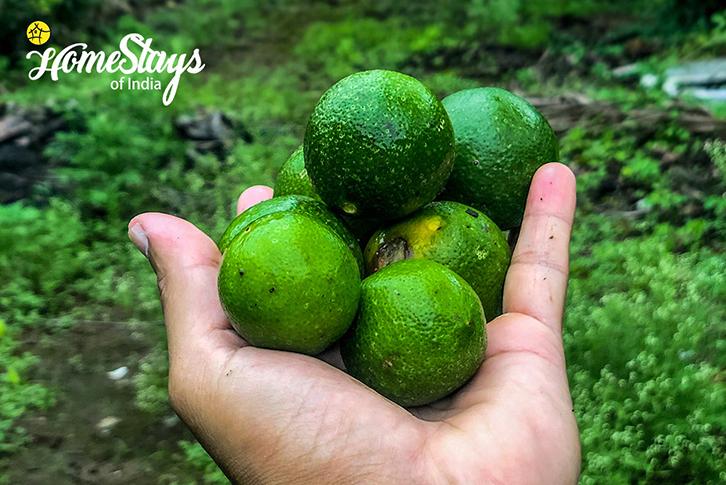 Organic Limes_Bordi Homestay