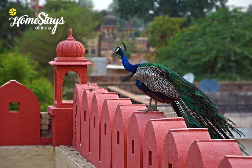 Peacock_Lotwara-Heritage-Homestay