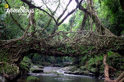 Root-Bridge_Mawlynnong Homestay