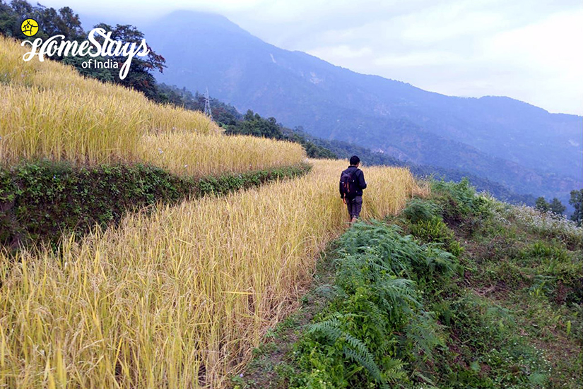 The Fields_Karongthang Homestay