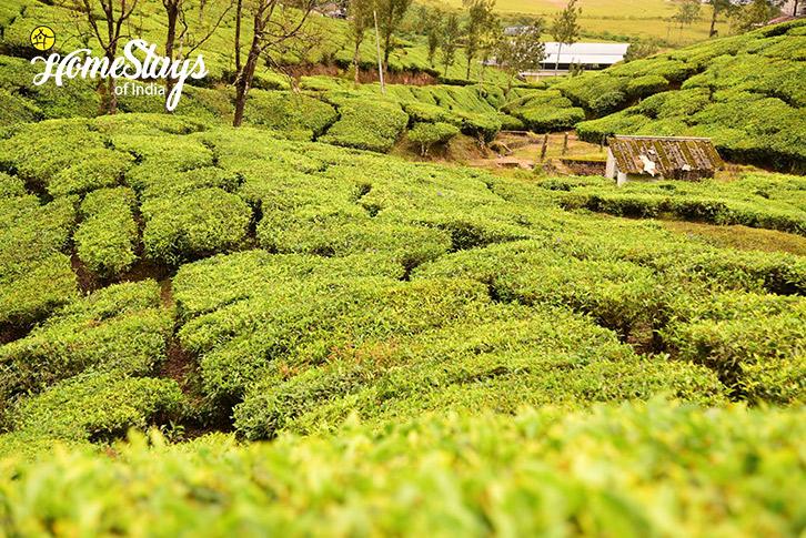 The-Tea-Garden-Pallivasal-Homestay-Munnar