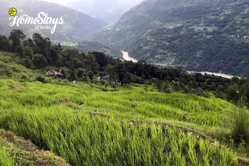Tista River_Karongthang Homestay