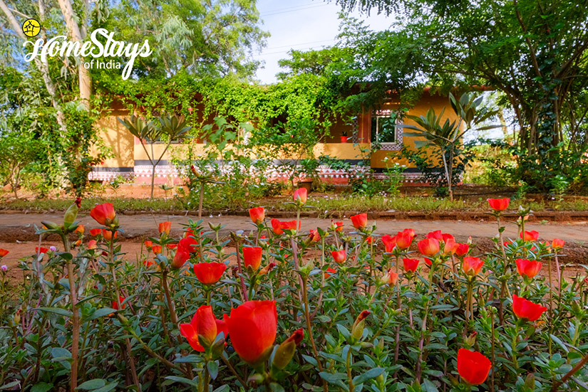 Tulip Garden-Channdaka-Homestay-Bhubneswar