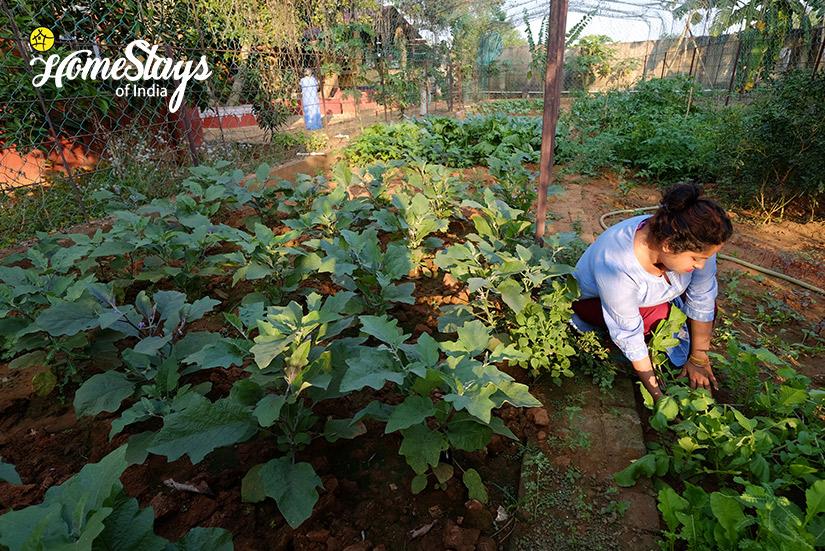 Vegetables-Garden_Channdaka-Homestay-Bhubneswar