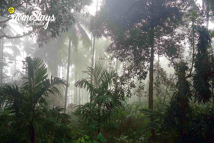 View-from-Balcony-Wayanad-Farmstay-Kerala
