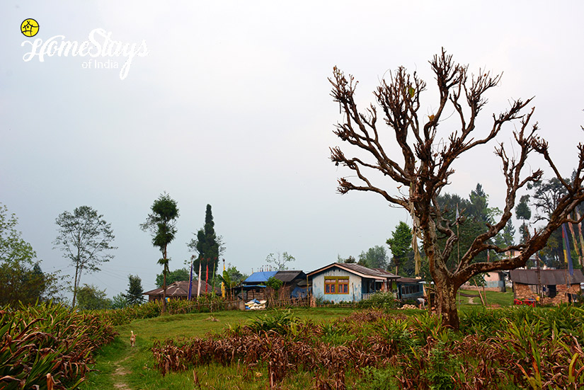 Village_Khecheopalri-Homestay-Sikkim