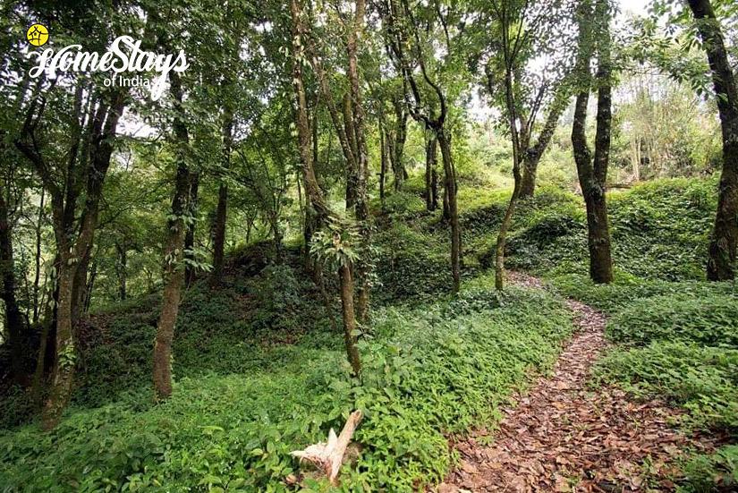 Walk_Kurseong Homestay_Darjeeling