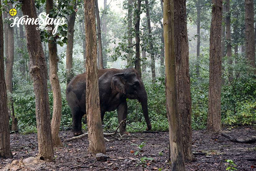 Wildlife 1_Ramnagar-Homestay-Corbett