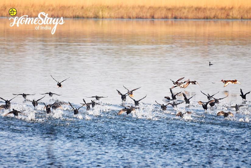 Wildlife 3_Ramnagar-Homestay-Corbett