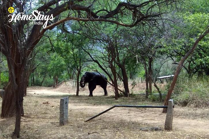 Wildlife-Around-Pallivasal-Homestay-Munnar