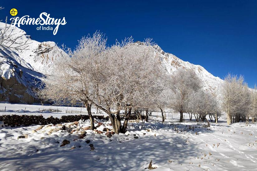 Winter4_Dhankar-Homestay-Spiti