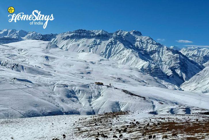 Winter4_Langza-Homestay-Spiti