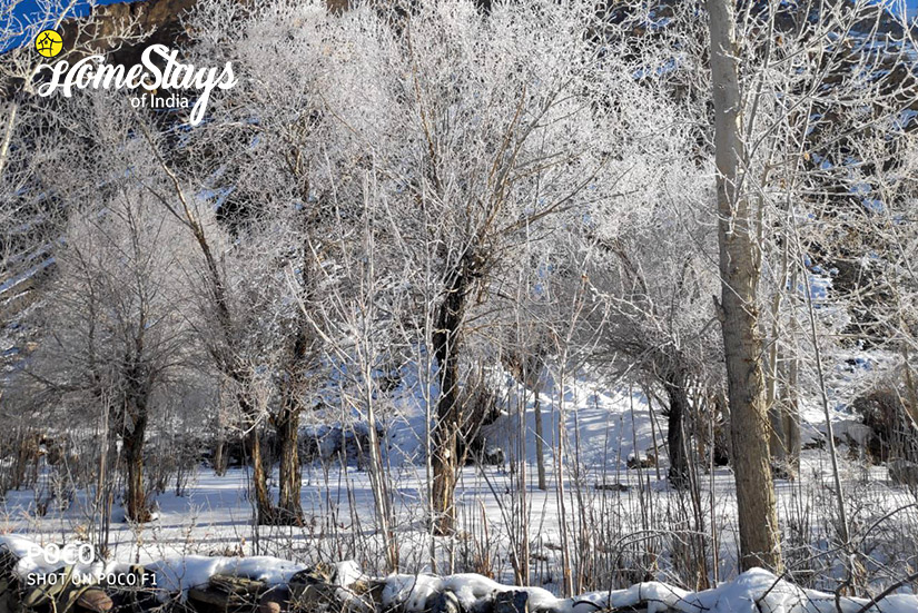 Winter6_Dhankar-Homestay-Spiti