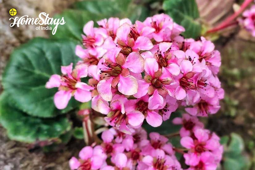 Flora2_Martam-Homestay-West-Sikkim