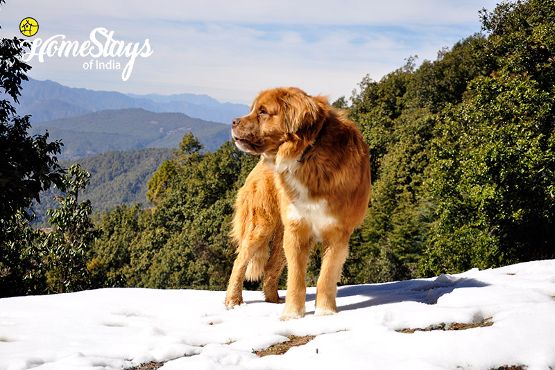 Winter2_Dalar-Homestay_Binsar