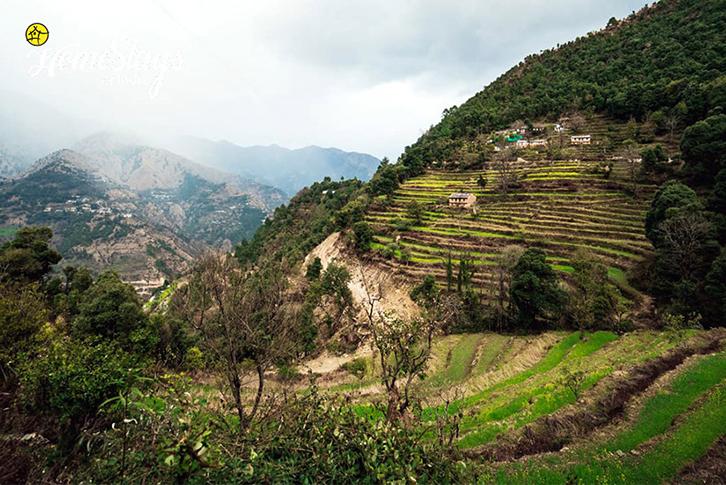 Step-Farming_Khalsen Homestay-Srinagar