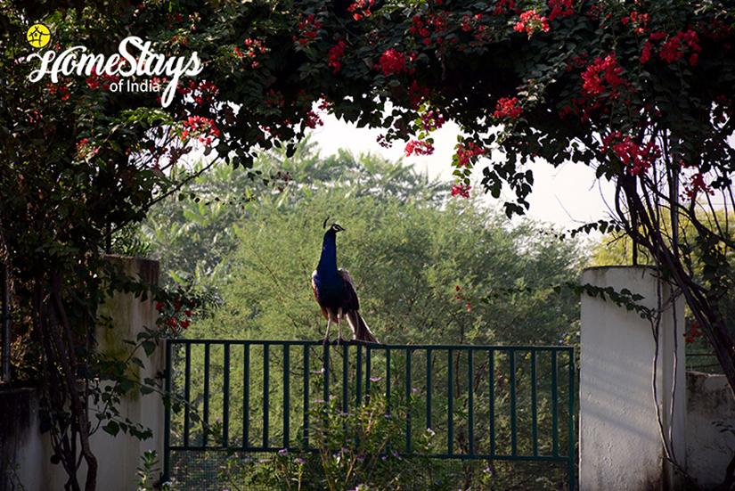 The Garden_Lotwara Heritage Homestay