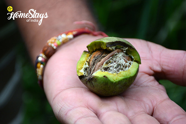 Walnut-Bohrakote Homestay-Ramgarh