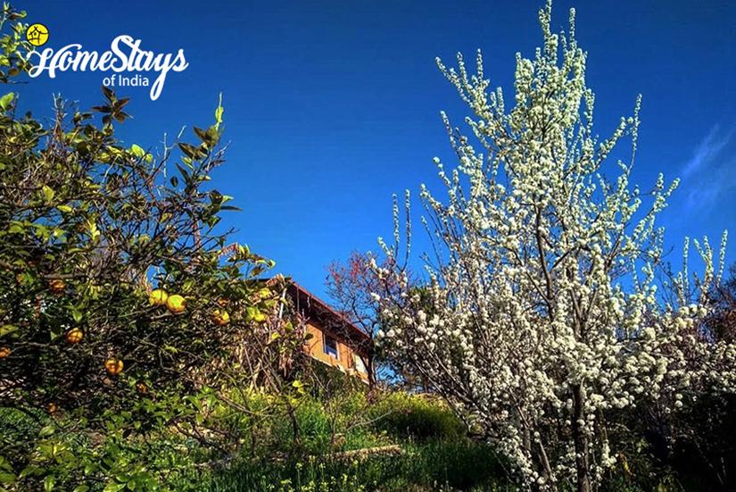Orchard_Chaukori-Homestay