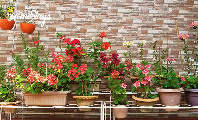 Spring_Laitumkhrah Homestay