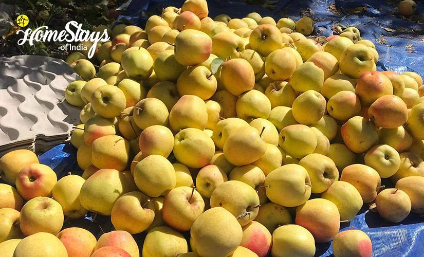 Golden-Apple_Kais Village Homestay-Kullu