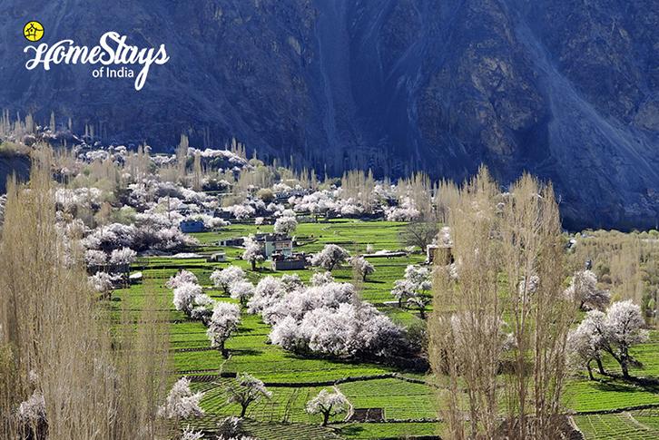 Spring_Turtuk Homestay-Ladakh